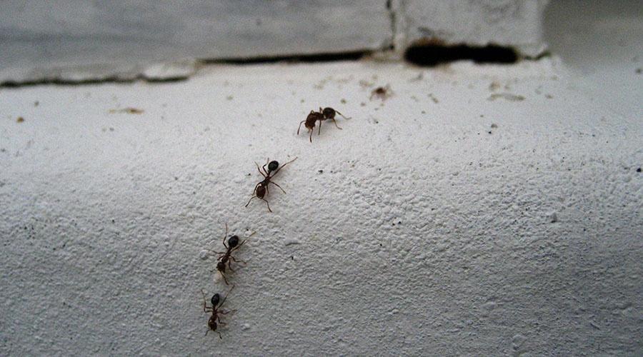 insecte in izolatie